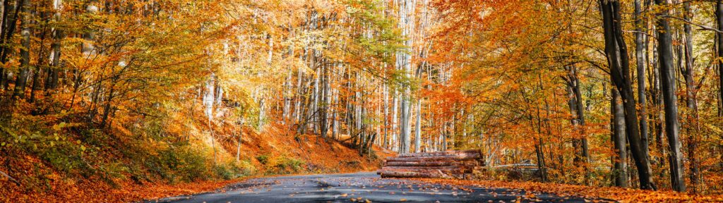 California Fall Drive: An Iconic Experience